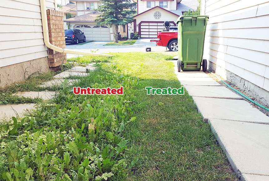 difference between lawns with and without weed control services in calgary