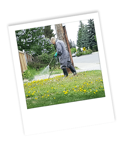 spraying weeds for weed control