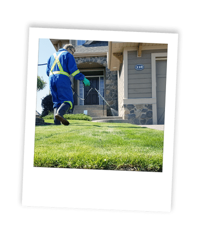 applying weed control treatment to calgary lawn