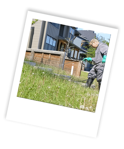 calgary weed control services are applied to grass