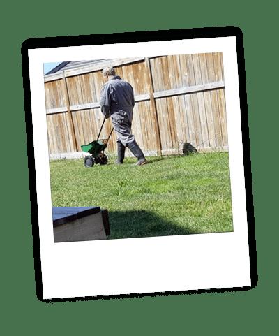 applying fertilization treatment to calgary lawn