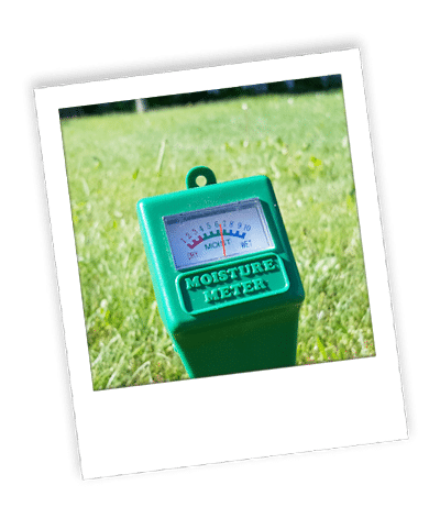 healthy lawn with fertilizer and weed control package