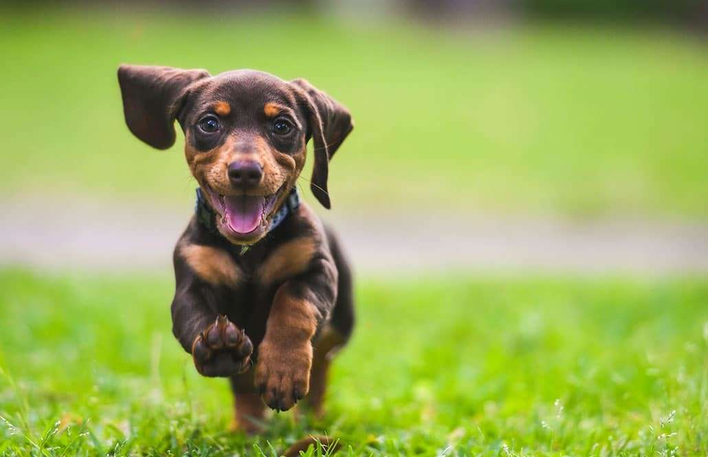 pet friendly lawn fertilization and weed control service