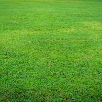 beautiful lawn after fertilizer and weed control applications